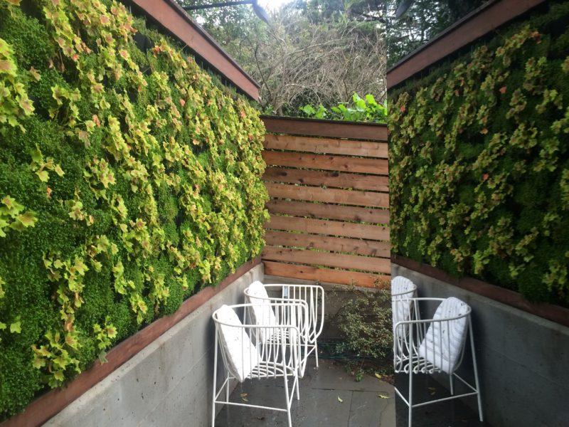 vertical garden & reflection